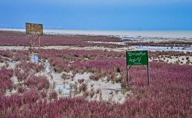 کانالهای انتقال آب خلیج گرگان مسدود شده است
