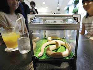 کافیشاپ مارها در ژاپن