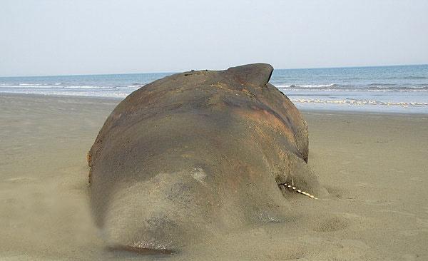 به گل نشستن نهنگ ۱۰ تنی در شیبکوه