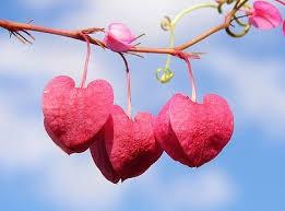 نگهداری از محبت