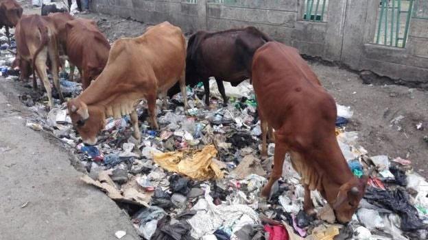 اعمال قانون منع استفاده از کیسههای پلاستیکی در کنیا