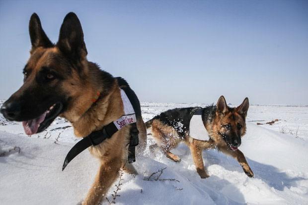راهاندازی واحد سگهای حافظ محیط زیست در محیطبانیهای کشور