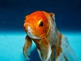 ماهیهای قرمز الکل تولید میکنند تا زنده بمانند