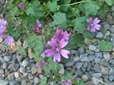 تصویر روز | رویش گل از دل سنگ