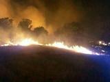 ۵۰ درصد آتشسوزی جنگلها در خوزستان است