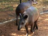 سرقت حیوانات از باغ وحش در پی کمبود مواد غذایی در ونزوئلا