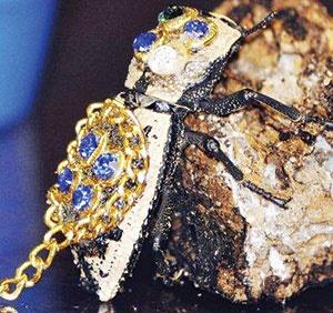 سوسکهای جواهرنشان مکزیک