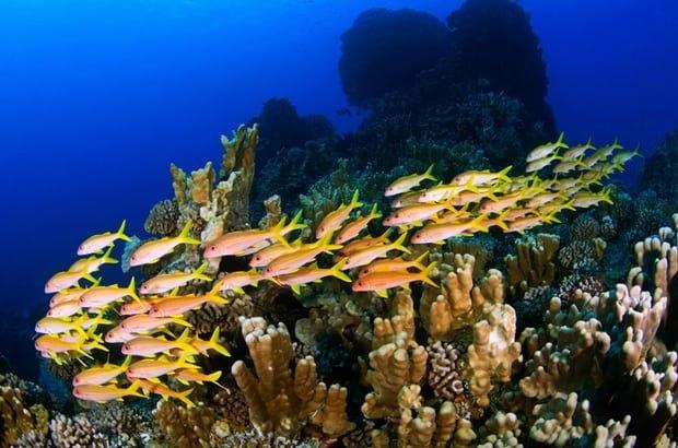 احداث یکی از بزرگترین پارکهای آبی در اقیانوس آرام