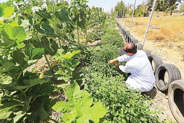 کشاورزی - ارگانیک