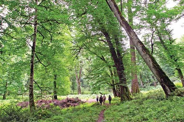 جنگلهای هیرکانی فرصتی مناسب برای پیوند طبیعت با فرهنگ شد