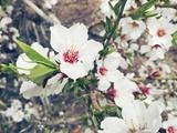 «میان شکوفههای سفید» و پنج شعر دیگر