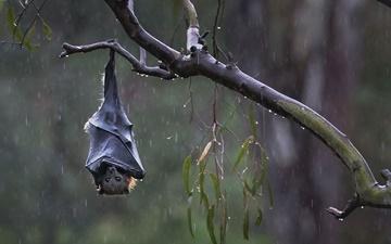 نقش خفاشها در پیشگیری از بیابانزایی