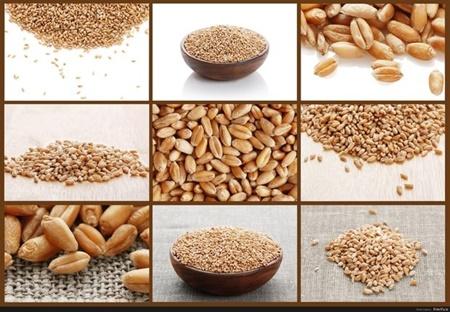 تغذیه,سرطان روده,مواد غذایی,سرطان