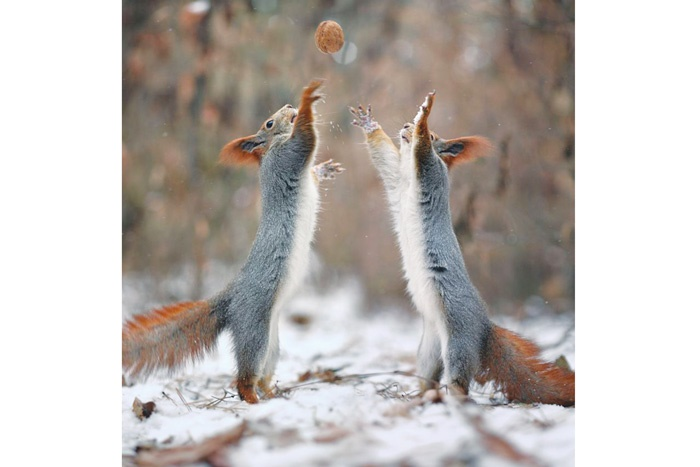زندگی سنجابی!