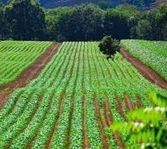زمین  کشاورزی