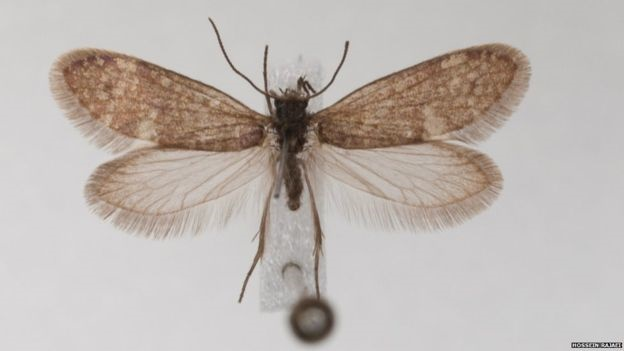 کشف فسیل پروانهای ۲۰۰ میلیون ساله در آلمان