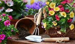 باغبانی به حفظ سلامت سالمندان کمک میکند