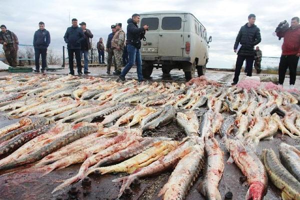 هشدار: کاهش شدید ذخایر ماهی دریای خزر