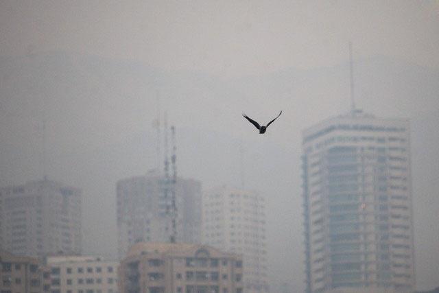 ۴۸۱۰ مرگ منتسب به آلودگی هوا در سال گذشته تهران