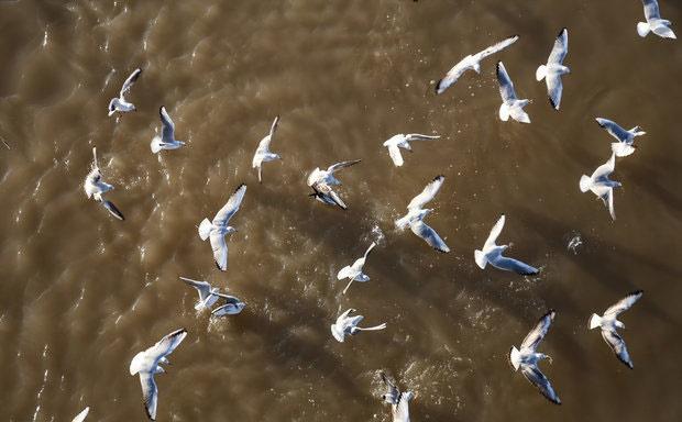 مهاجرت منفی پرندگان نتیجه خشکسالی در دزفول