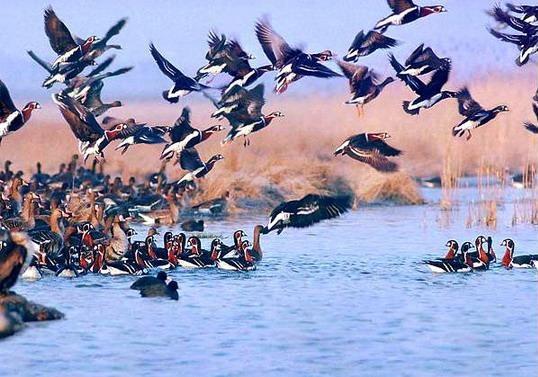 ورود ۳۰ هزار پرنده به پناهگاه حیات وحش امیرکلایه