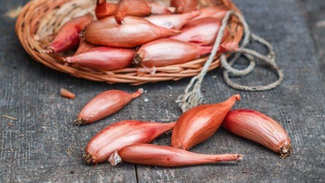 موسیر میتواند به درمان سل مقاوم کمک کند