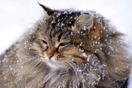 آمادگی محیطبانان برای امدادرسانی به حیات وحش در پی بارش برف