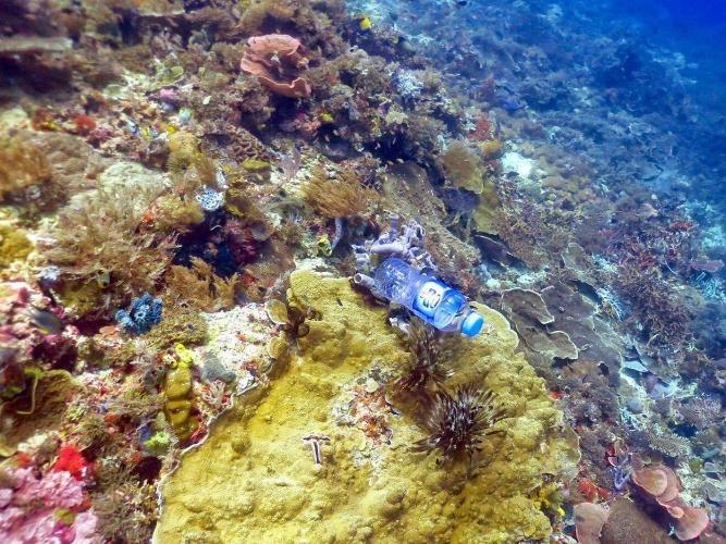 پلاستیکها مرجانها را میکشند