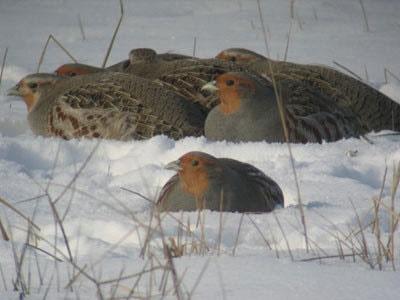 گشت و پایش ویژه محیط زیست در روزهای برفی