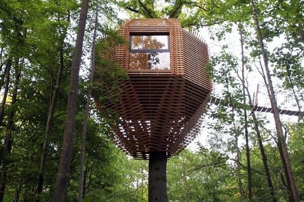 ساخت خانههای لوکس در نوک درختان خانه درختی