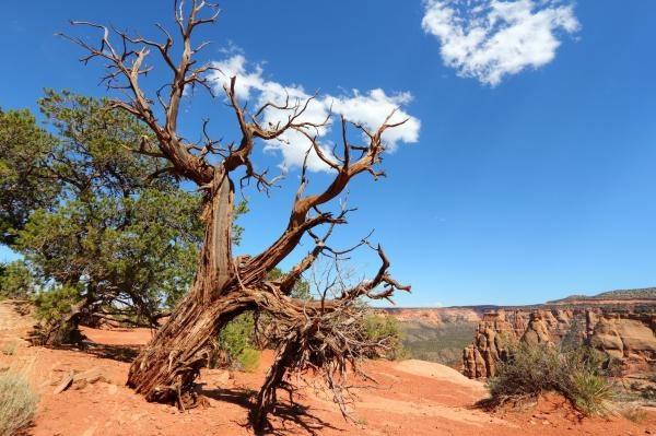 خطر خشکسالی دائمی در انتظار ۲۵ درصد مناطق زمین