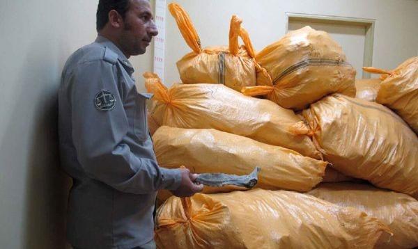 محموله بزرگ قاچاق بال کوسه متلعق به ۱۴۰۰ کوسه در چابهار کشف شد