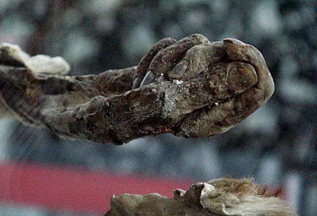 برای مردان نمکی | باستانشناسان آلمانی در راه ایران