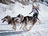 عکس روز: سگهای سورتمه