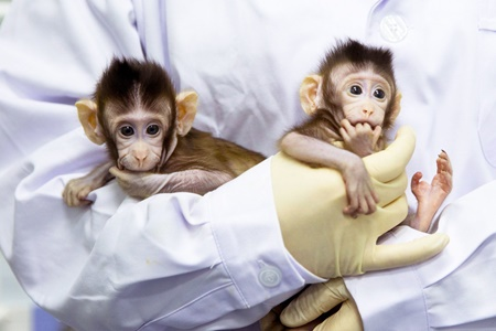 نخستین شبیه سازی میمون در چین انجام شد