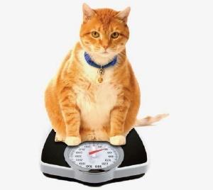 نکته بهداشتی: درباره وزن حیوان خانگی