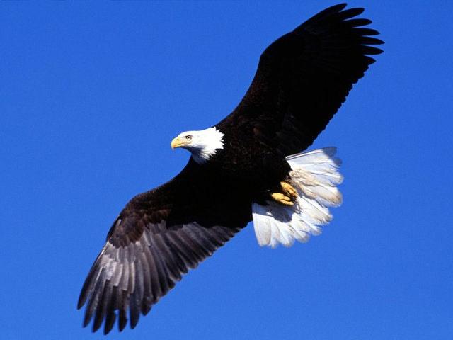 بیش از ۵۰ درصد پرندگان شکاری با افت شدید جمعیت مواجه هستند