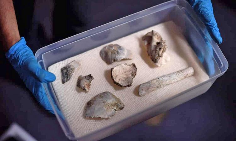 کشف قدیمیترین فسیل انسانی در خرابههای موزه ملی برزیل