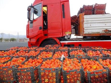 قیمت گوجهفرنگی هفته آینده کاهش مییابد