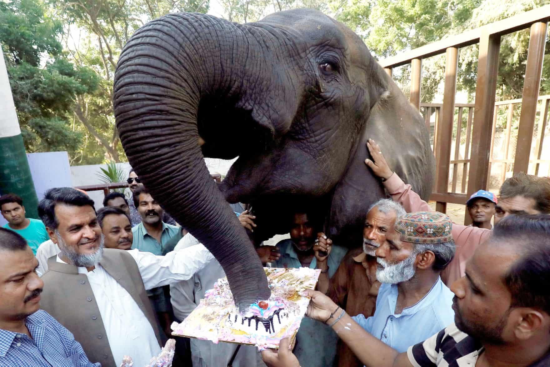 عکس روز: جشن تولد فیل