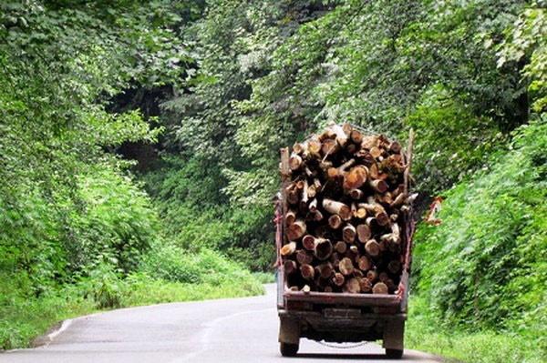 کشف ۵ تن چوب قاچاق در املش