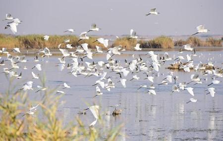 محمیه ها قتلگاه پرندگان مهاجر خوزستان