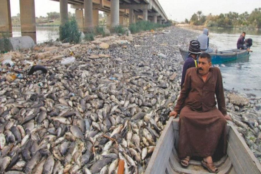 بحران مرگ دسته جمعی ماهیها در دجله و فرات