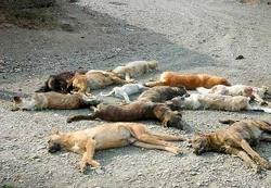 ادعای سگکشی وسیع در اهواز   ورود بازرس ویژه استاندار خوزستان به ماجرا