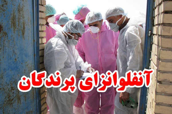 هشدار جدی دامپزشکی در باره ویروس جدید آنفولانزای فوق حاد پرندگان