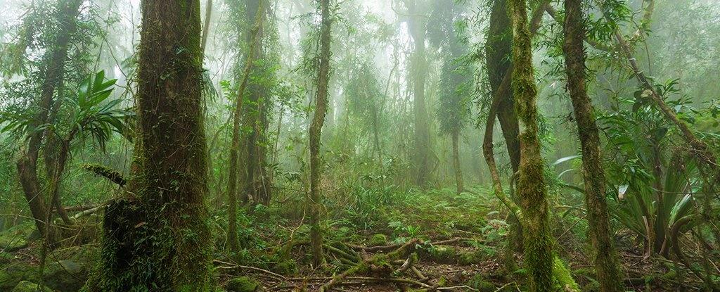 جنگلهای آمازون در یکقدمی نابودی