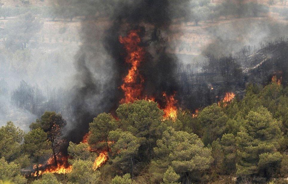 افزایش ۲۰ درصدی آتشسوزی جنگلها در سال ۹۶ نسبت به سال ۹۵
