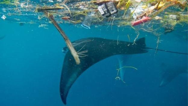 خطر جدیِ میکروپلاستیکها برای آبزیان بزرگجثه