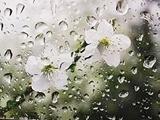 پیش بینی روزهای برفی و بارانی