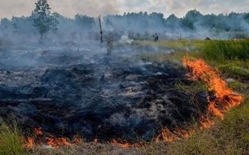 اندونزی در پی جبران خسارت آتشسوزیهای جنگلی